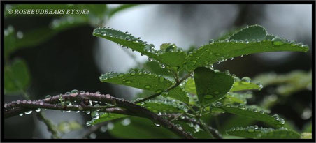 Klettergurke Regen