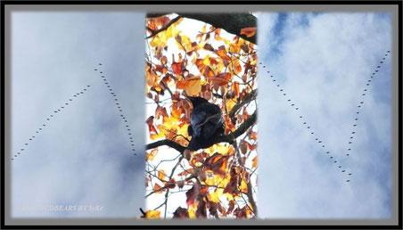 Vogelzug Gänse Amsel
