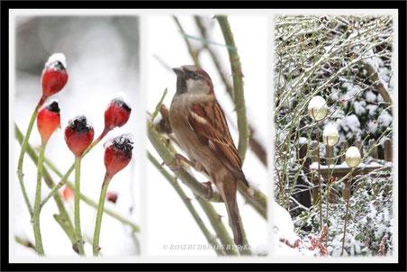 Schneetreiben - ein Spatz wartet auf Nachschub am Futterhaus