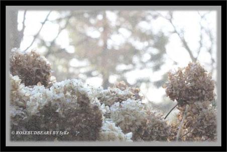 Hortensienblüten Nebel