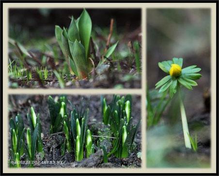 neue Blüten in den Startlöchern