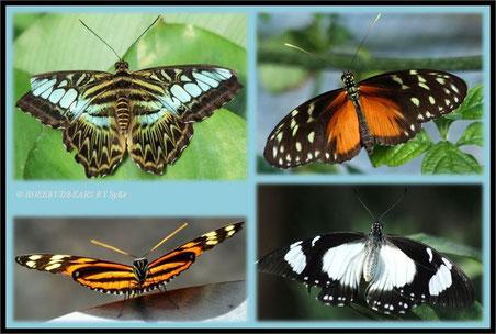 Hannover Berggarten Schmetterlinge