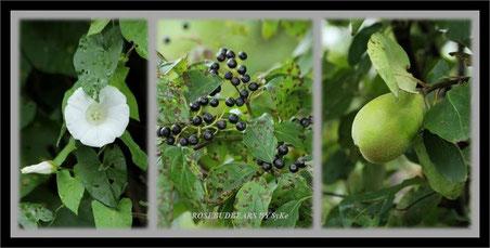 im Garten gefunden - was sind das für Beeren?
