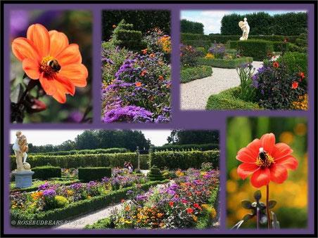 Hannover Herrenhausen: der Niederdeutsche Blumengarten im Großen Garten mit Buchsbäumen für die Einfassungen und  schönen roten Dahlien