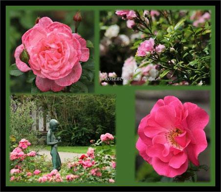 Stadtpark Hannover Rosenbeete Rosenjunge Vierthaler