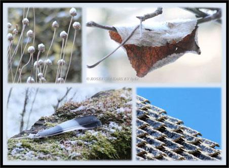 Schnee und Frost im Garten