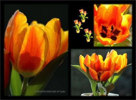 rot-gelb geflammte Tulpen