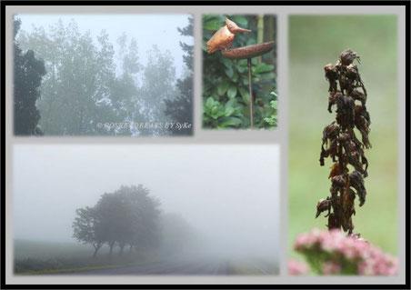 dichter Nebel hüllt alles in Nässe