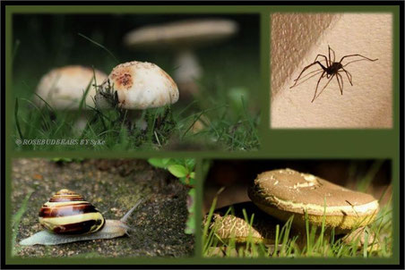 der Körper der Spinnen hatte locker 3 cm - nichts für Phobiker