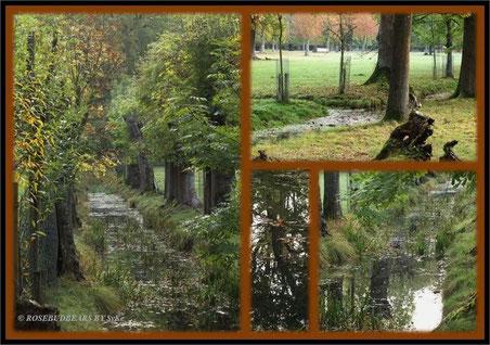 Grün und viel Wasser im Hannovers Tiergarten