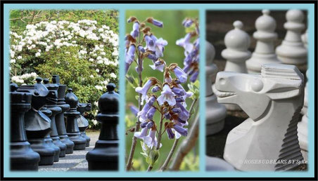 Hannover Stadtpark Blauglockenbaum Schachfiguren