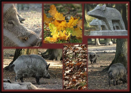 Tiergarten Hannover Wildschweingehege