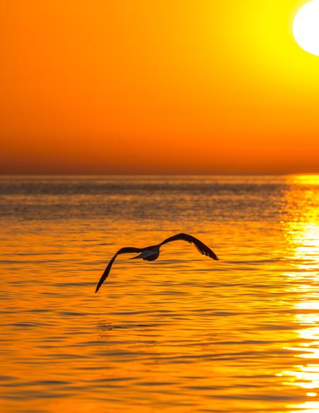 Vogel Abend Sonnenuntergang Farben Emanuel Niederhauser pic4you