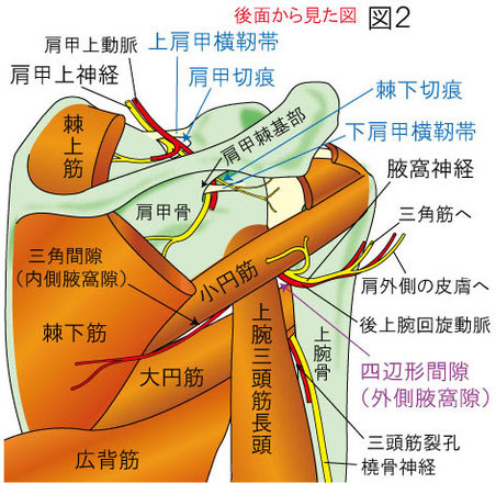四辺形間隙症候群、肩甲切痕症候群、棘下切痕症候群
