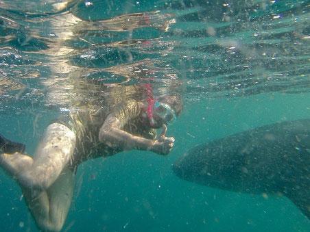 Meine Tauchgänge in Mexiko  Meine Höhepunkte in Mexiko La Paz auf der Baja California ist ein Eldorado für Taucher und Schnorchler Einer der besten Orte auf der Welt um mit den Walhaien auf Tuchfühlung zu gehen    Mit freundlicher Unterstützung von: http:
