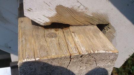 Holzersetzung an einem Dachbalken durch einen Pilz, dieser drang durch fehlende Imprägnierung an der Fußfette und dem Sparren ein.
