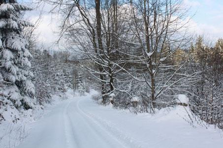 Weg bergab in Richtung Holzbachtgal zum Bergwaldweg (G. Franke)