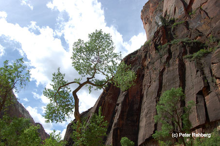 Riverside Walk, Zion National Park, Peter Rehberg