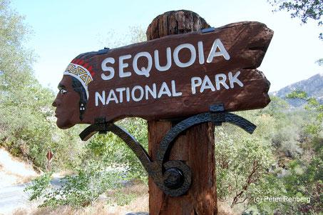 Sequois NP, Peter Rehberg