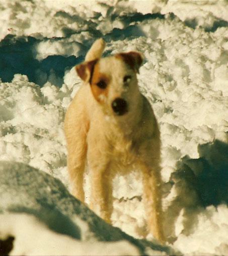 Bolero by Windrush im Schnee