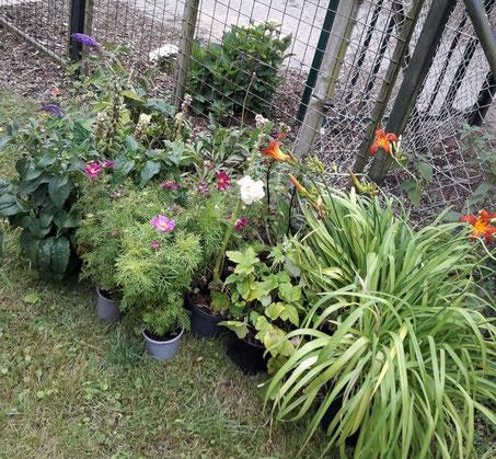 Gespendete Blumen für das Kneipp-Gelände.