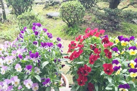 癒しの和エステ「心美」の窓から見える庭の景色