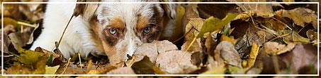 Tierfotograf-Juergen-Sedlmayr-Hund-Schnauze