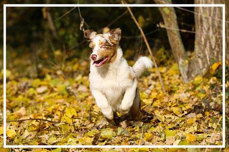 Fotoshooting-Tierfotograf-Juergen-Sedlmayr-Hund-im-Wald