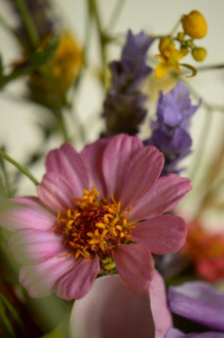 in a vase on monday, monday vase, desert garden, small sunny garden, amy myers, photographer, photography, zinnia
