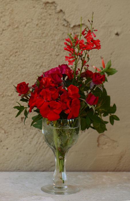 small sunny garden, desert garden, amy myers, photography, garden, blog, in a vase on monday, monday vase, iavom