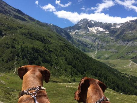 Pfelders in Südtirol