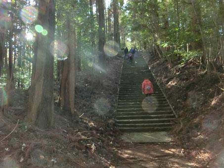 「高千穂の熊野古道」ともいわれるすばらしい森の参道です。