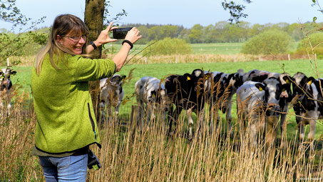 Anja Bornhoff fotografiert mit ihrem Huawei P20 Pro Kühe