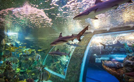 Aquarium im parque de las ciencias