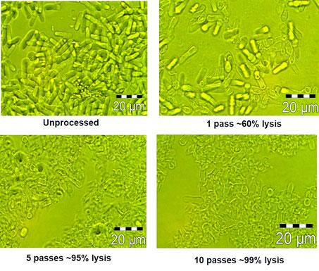 細胞破砕 高圧ホモジナイザー
