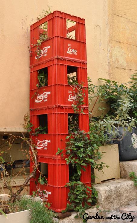 Tour de caisses coca-cola envahie par la tradescantias