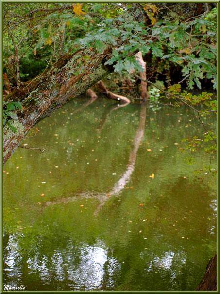 Chênes et reflets automnaux sur La Leyre, Sentier du Littoral au lieu-dit Lamothe, Le Teich, Bassin d'Arcachon (33)