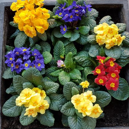 Wandelsinn im Frühling