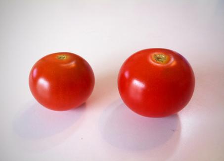 哲平が学校で育てたプチトマト。 ありがたくいただきましたが、味は普通でした、。