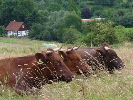 Dörentrup - Das Dorf der Tiere © Projektbüro Hansaweg