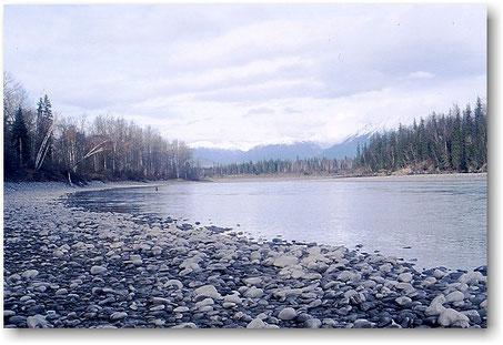 Steelhead Skeena River