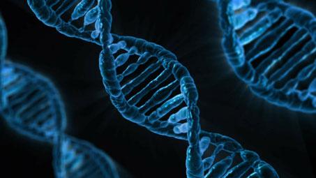Abbildung von Genen