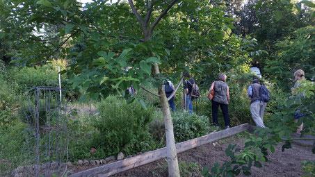 Foto: Rundgang durch die Gemüsebete, NABU-Stuttgart