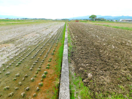 耕転前の稲田と後転後の稲田の写真