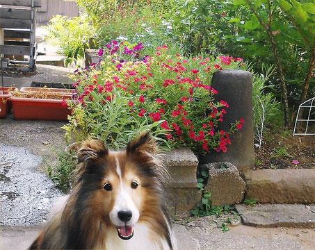 Beside LL Garden