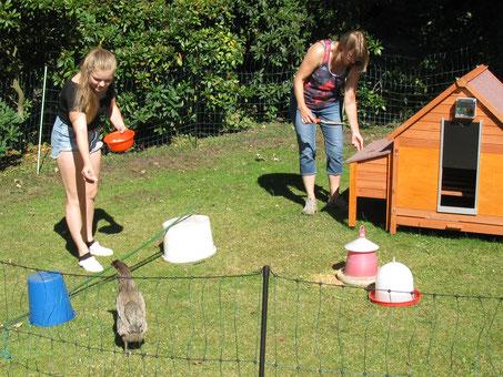 Hühner beschäftigen: Kleine Kunststücke und Tricks beibringen