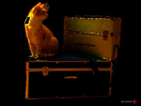 Mobile Tierbehandlung (Foto: Tierärztin Svea Lucas)