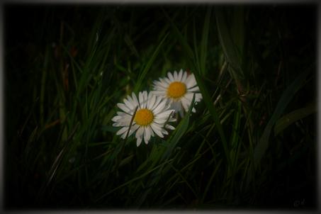 Zweisamkeit im dichten Gras eines Feldes