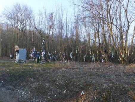 site arbres à loques