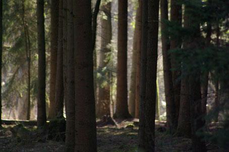 Manchmal sieht man den Wald  vor lauter Bäumen nicht.